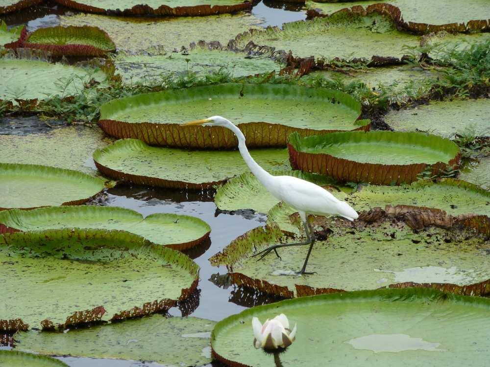 Brasilien-Reisetipps-Amazonas-Kranich-neu