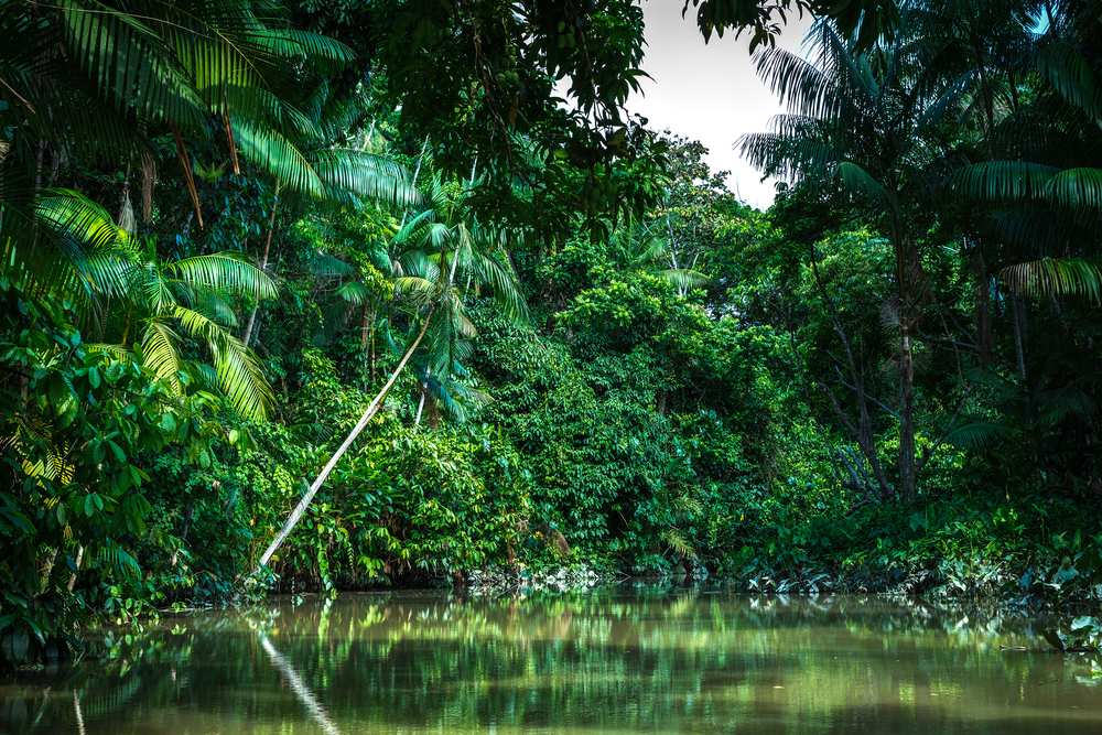 Reisetipps-Brasilien-Amazonas-Urwald-neu