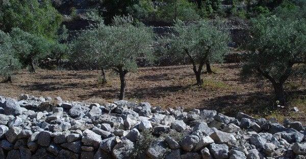 Die Kulturlandschaft mit Wein- und Olivenhängen der Terrassen von Battir, südlich von Jerusalem, Palästina © advocacy_project/flickr.com