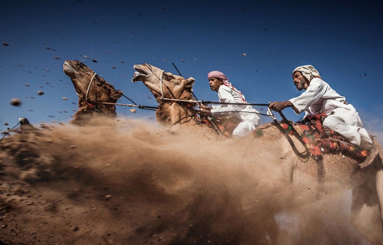 kamelrennen staub