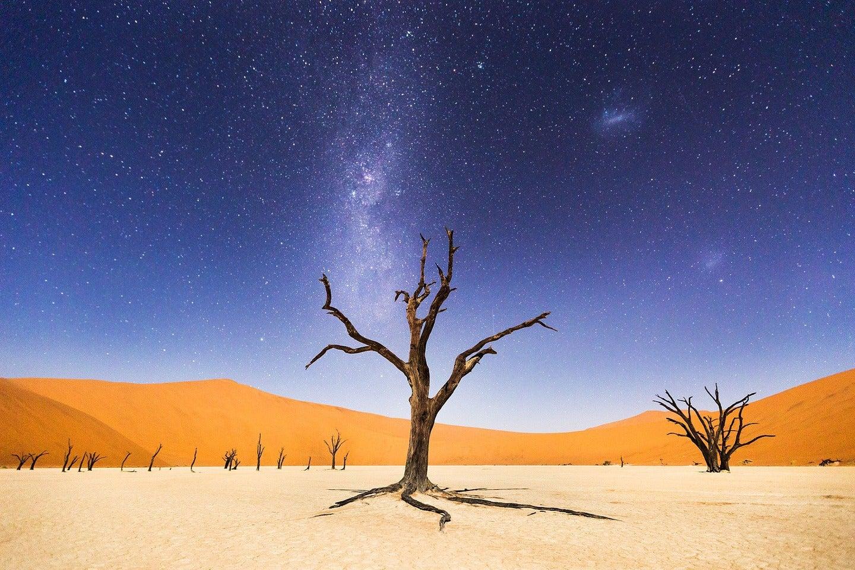 baum wüste death valley nacht milchstrasse beth mccarley