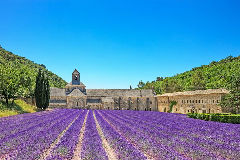 Notre Dame de Sénanque, provence, luberon, vaucluse, lavendel