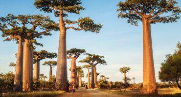 Wellness aus Afrika