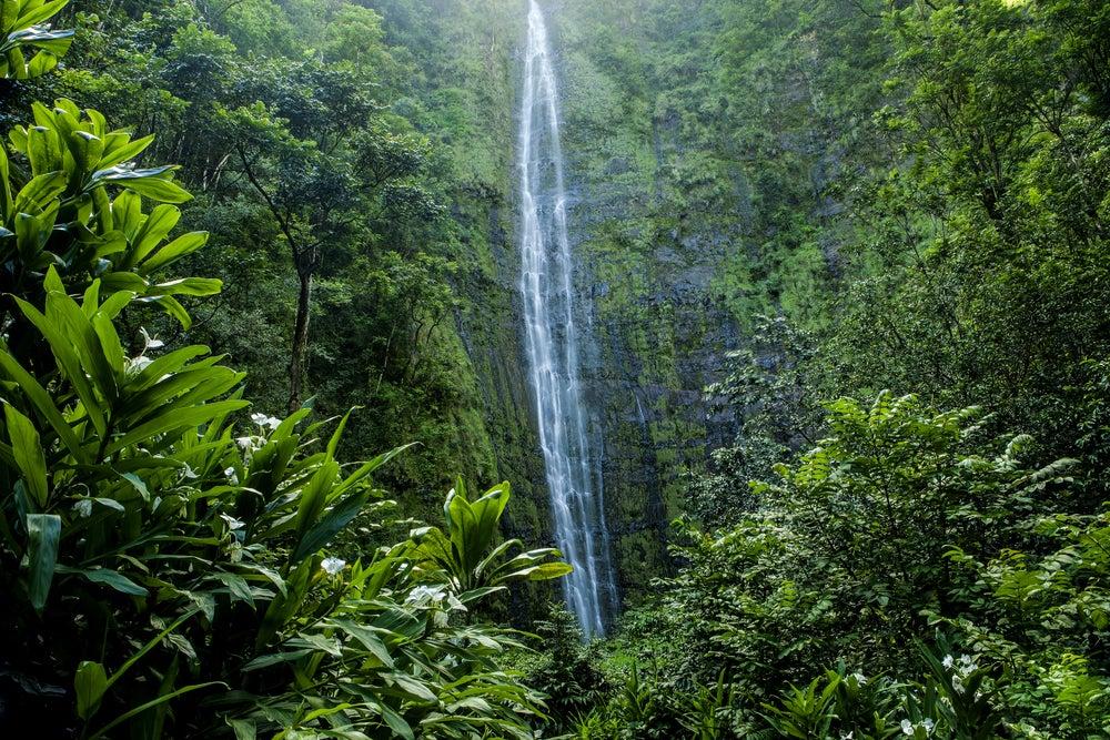 Die Waimoku-Falls sind 121 Meter hoch.