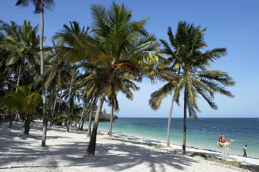 diani beach, kenia, afrika, indischer ozean, palmen, strand