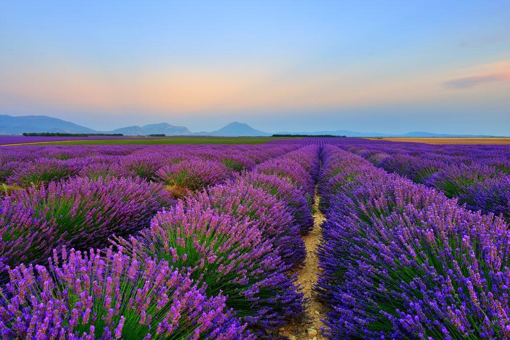 Wellness aus der provence opodo reiseblog for Lavendelfelder provence