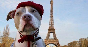 FlyingDogs – Opodo launcht einen neuen Service für den Hunde-Urlaub