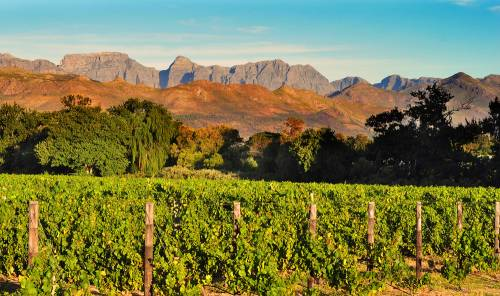 Stellenbosch - Kapstadt - Travel Blog
