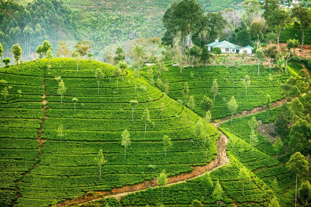 Sri Lanka - Opodo Reiseblog (1)