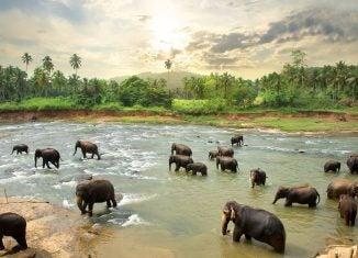 Sri Lanka - Opodo Reiseblog (7)