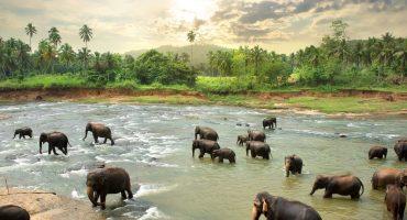 Entdecke die Vielfalt Sri Lankas!