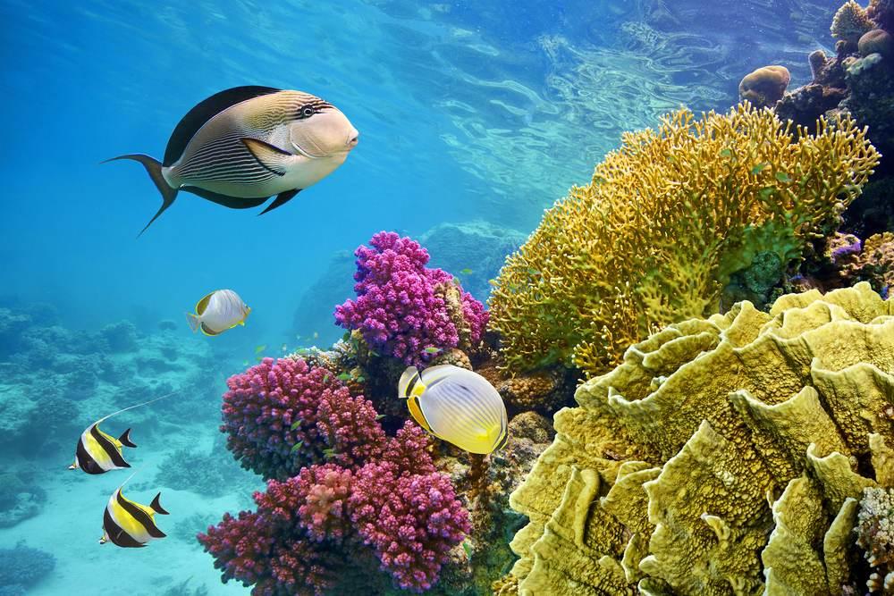 top 10 der beliebtesten urlaubsziele 2019, hurghada, unter wasser, schnorcheln, tauchen, korallen, fische