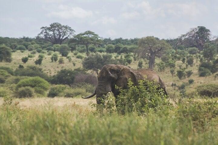 Tanzania_Beliebteste Osterreiseziele 2018_Opodo Reiseblog
