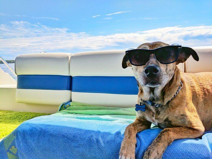 Reisen mit Hund - Opodo reiseblog