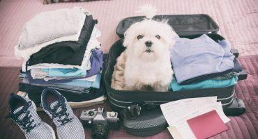 Reisen mit Hund: So geht's